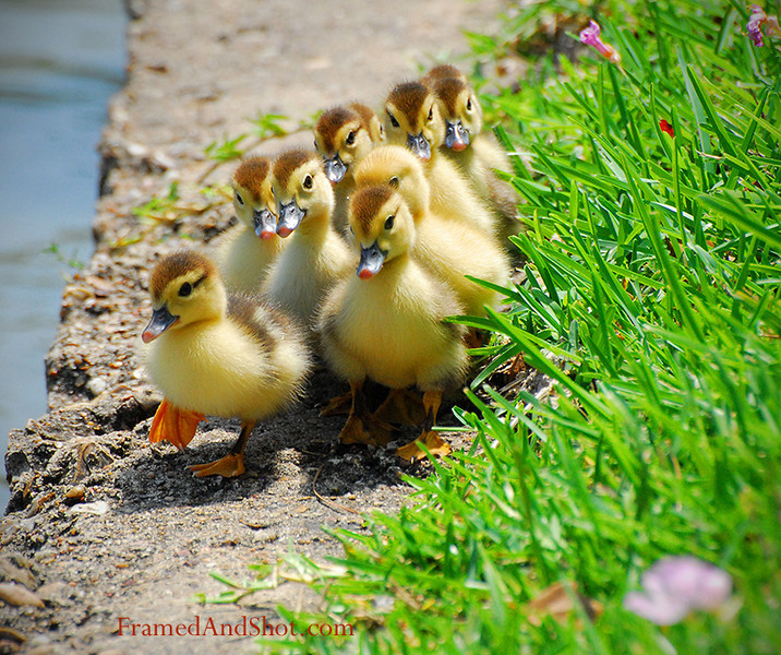 """<strong><center>Brave New World ~ Here we come!</strong></center> This little fellow who leads his sibling into the brave new world are among the cutest thing we can imagine!  <span style=""""font-size: 10pt"""">(And the book<a href=""""http://en.wikipedia.org/wiki/Brave_New_World""""> """"Brave new world""""</a> was ranked number five by the Modern Library on its list of the 100 best English-language novels of the 20th century.)"""