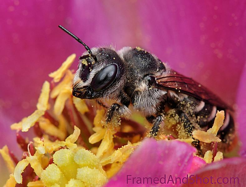 Pollen for Breakfast