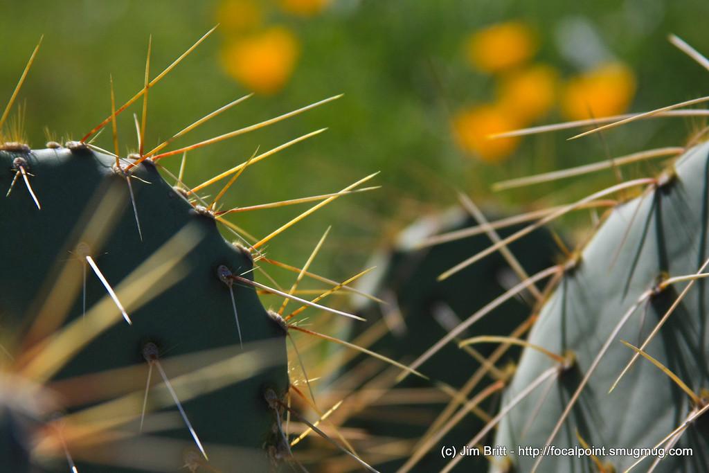 Cactus - taken at Picacho Peak State Park this last weekend.