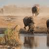 <em><strong><center><b>Water and elephants - It is an wonderful experience to watch the joy they express when reaching the waterhole for a bath!