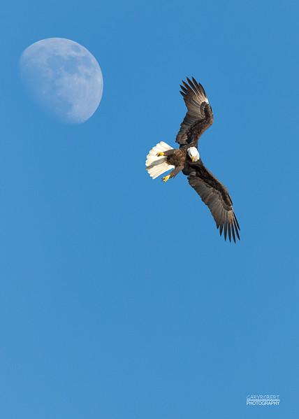 Eagle_Moon -9736