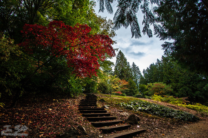 """The Path"" at the Washington Arboretum."