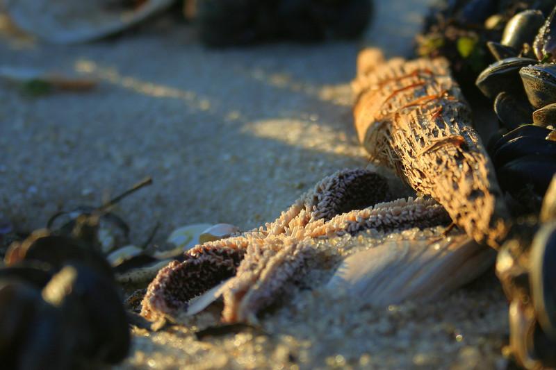 Starfish at Pike's Beach.