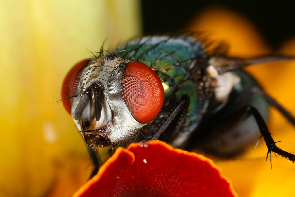 Insect macrophotography.