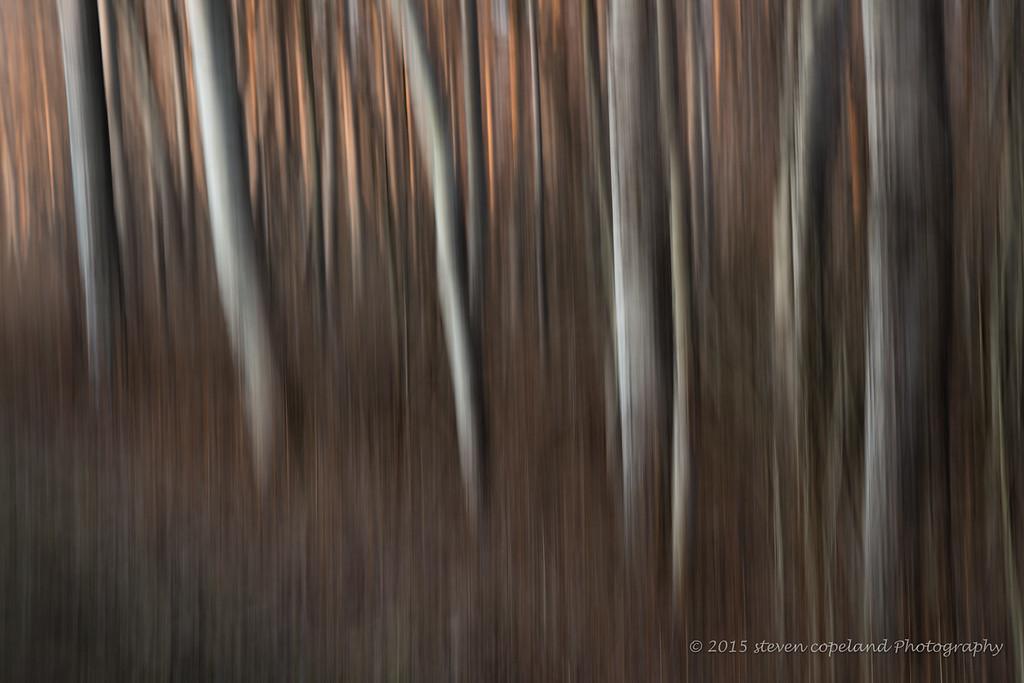 Mendon Trees #45