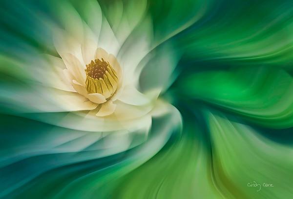 Water Lily Swirl