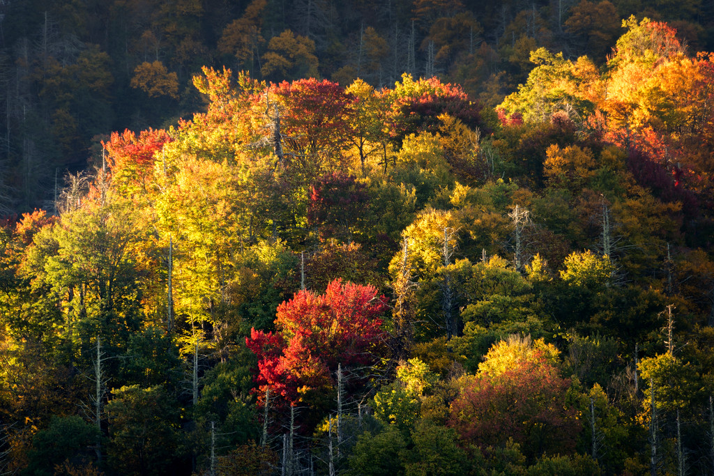 Fall Color in the Smoky Mountains (Great Smoky Mountain National Park)