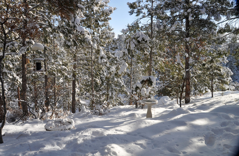 New Mexico Winter - Spring is Not Quite Here Yet