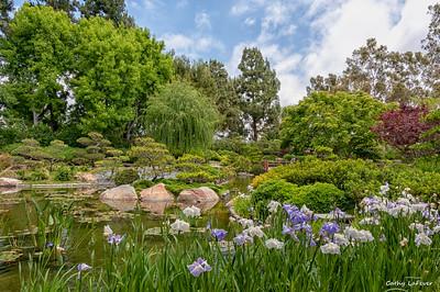 Earl Burns Miller Japanese Garden, CSULB, CA