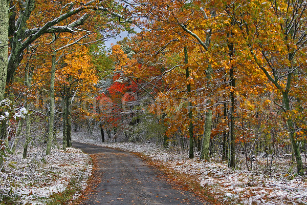 Fall color and snow - 11/28/09