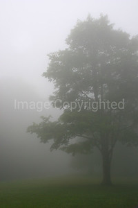 Lone Tree in Foggy Morning - 8/26/06