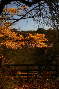 Autumn Gate - 11/14/06
