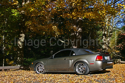 Cobra in fall 08 - 10/13/08