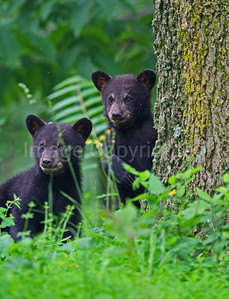 2 cubs looking around - 6/13/09