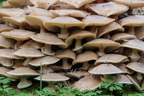 Mushroom Village, Glen Ellen