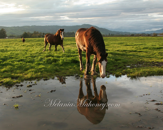 Horses24x30_8379