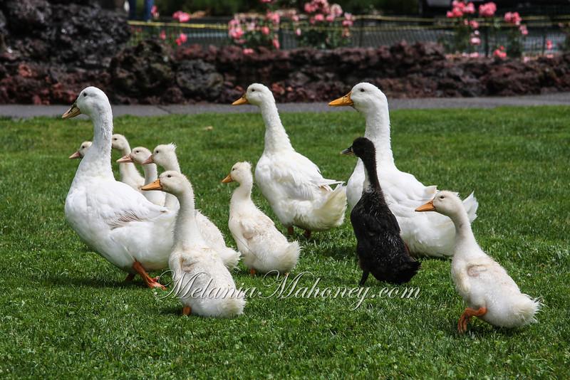 Birds2010 mm-7444