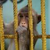 Camaguey zoologico