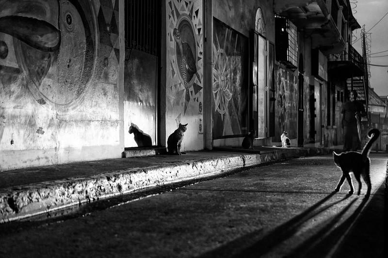 Felinos nocturnos