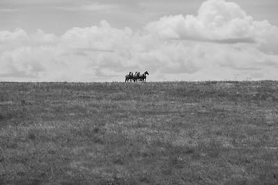 Horses on ridge near Capa, South Dakota
