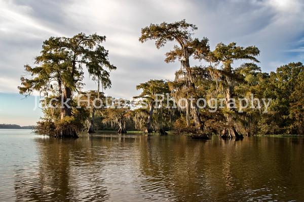 Landscape - Swamp and Bayous