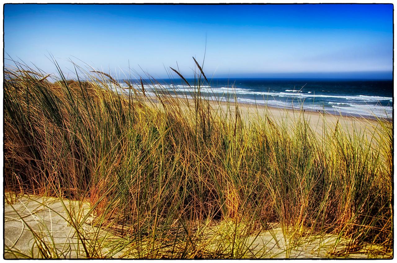 Sand Dunes: Oregon Coast