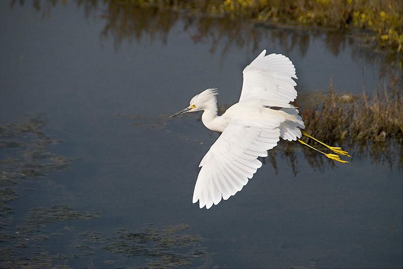 Bolsa Chica, California Wetlands