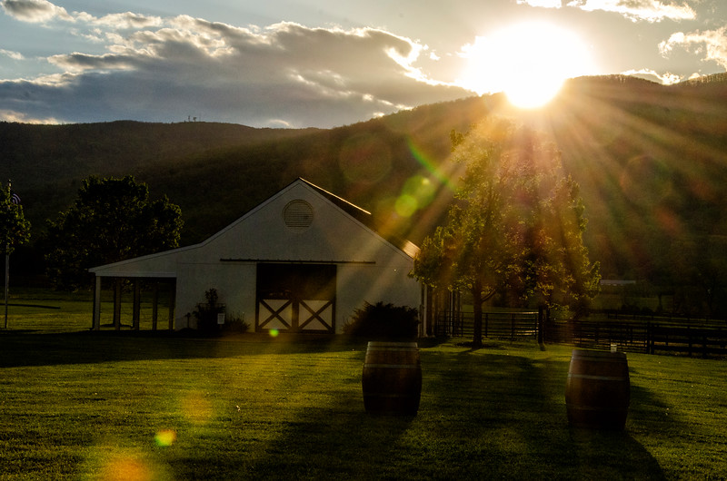 Sun Rays at the Winery