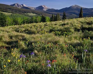 Wildflowers on Hamilton Mesa, Pecos Wilderness, New Mexico, June 2012.