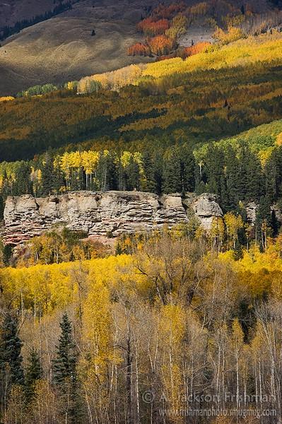 Aspen chiaroscuro, Chama Basin, Colorado, October 2010.