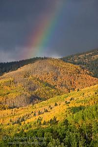 Forest color meets sky color in Tesuque Basin, Sangre de Cristo Mountains, New Mexico, October 2010.