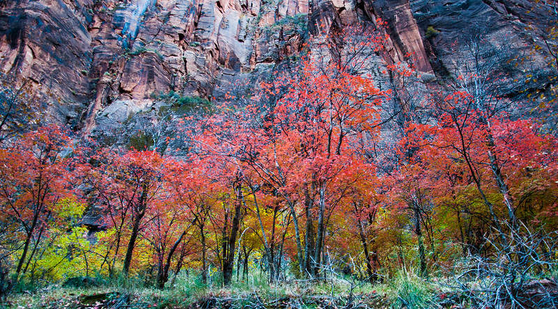 Autumn Colors, Zion National Park, Utah