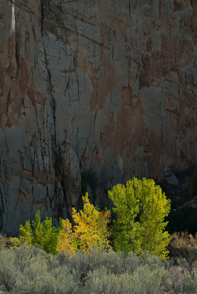 Cottonwoods and Canyon, Utah