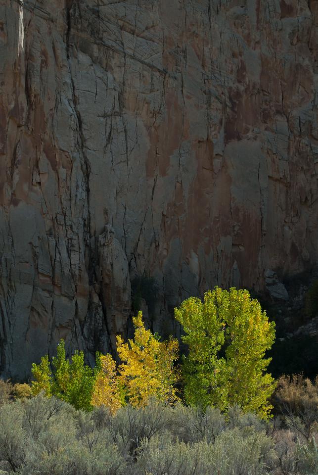 Cottonwoods and Canyon, Utah