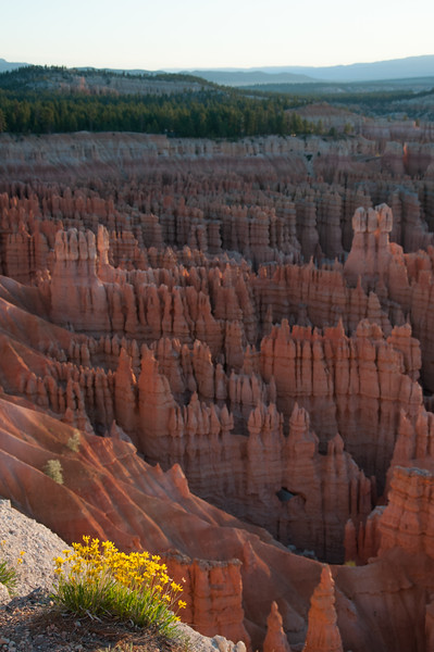 Flowers and Hoodoos, Bryce Canyon National Park, Utah