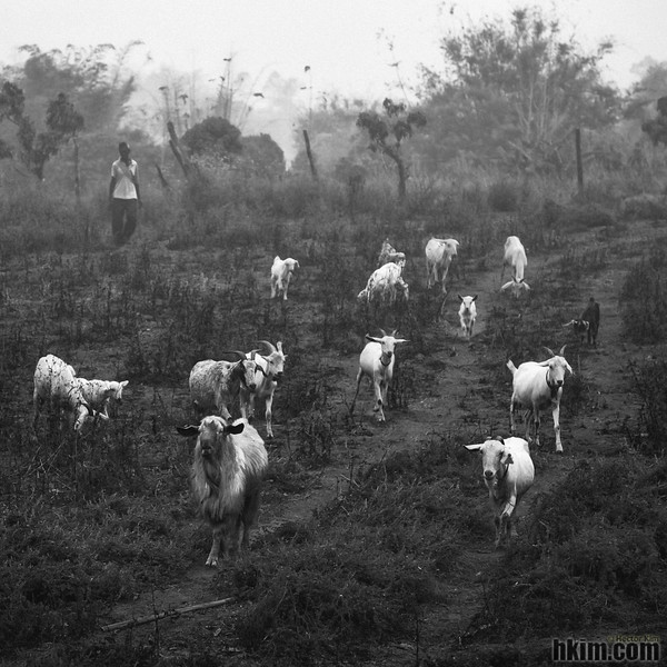 The Leader, the Followers and the Herder<br /> Pai, Thailand