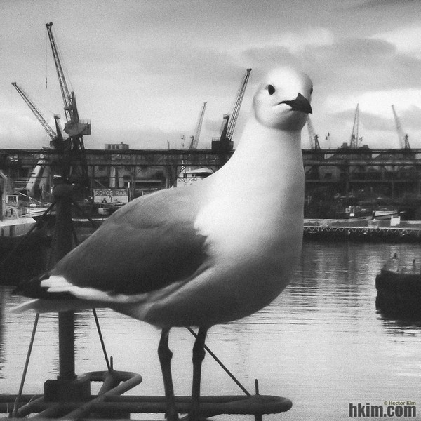 Seagull in the Harbor<br /> Cape Town, South Africa