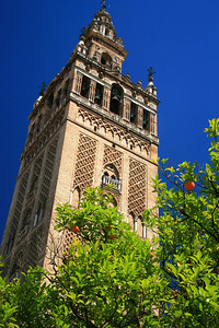 Orange tree in front of the Seville cathedral tower/minaret.
