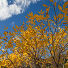 Autumn Color at United States Air Force Academy in Colorado Springs, Colorado.