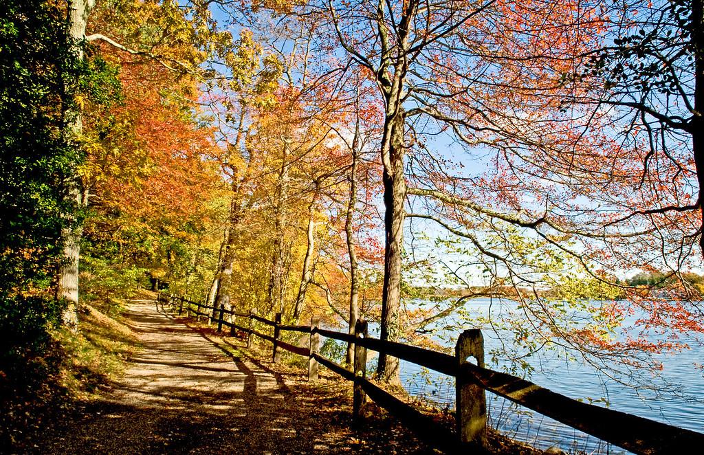 Connetquot River at the Bayard Cutting Arboretum in autumn