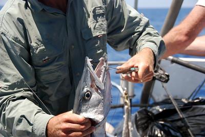 Sportfishing Image