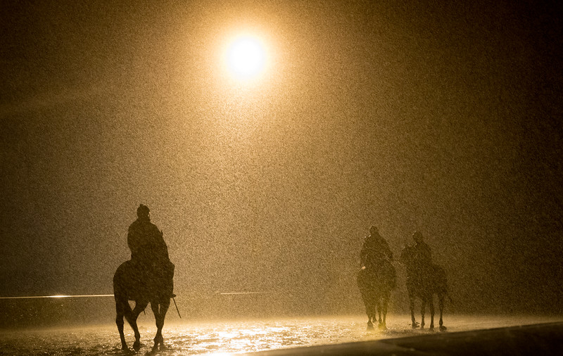 Thoroughbred horses make their way around a practice track under heavy rain in Lexington, Kentucky.