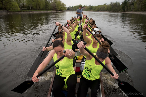 SEGO2018-0515-041 15 May 2018  Sportchicks Dragon Boat Team practice on Rideau Canal from Rideau Canoe Club in Ottawa, Ontario.   © Serge Gouin 2018  www.segophoto.ca