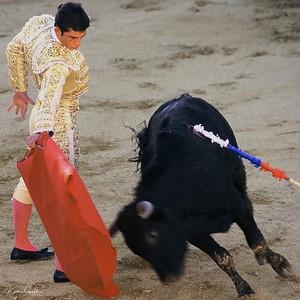 El Matador, El Toro