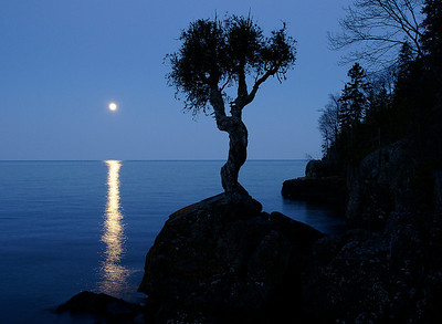 May Full Moon over Little Cedar Spirit Tree 1