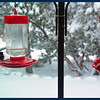 Hummer feeders with cold hummers.