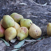 Pears for PS-78