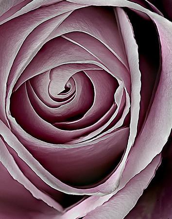 _KGB9749-52_roses-20090221