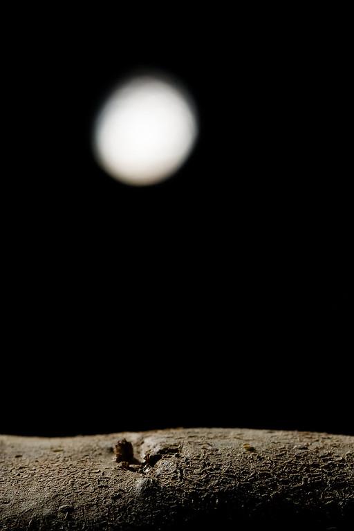 Moon over potato