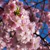 Sweet flowers<br /> Sweet flowers